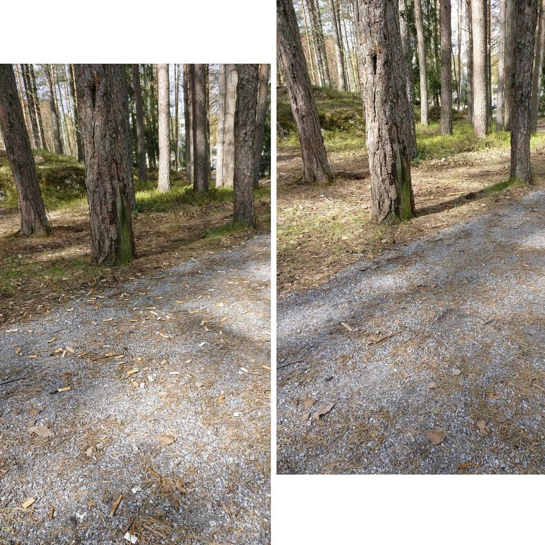 Evi puhdisti metsätien tupakantumpeista. Vasemmassa kuvassa näkyy tie täynnä tumppeja, oikeanpuoleisessa kuvassa puhdas tie.